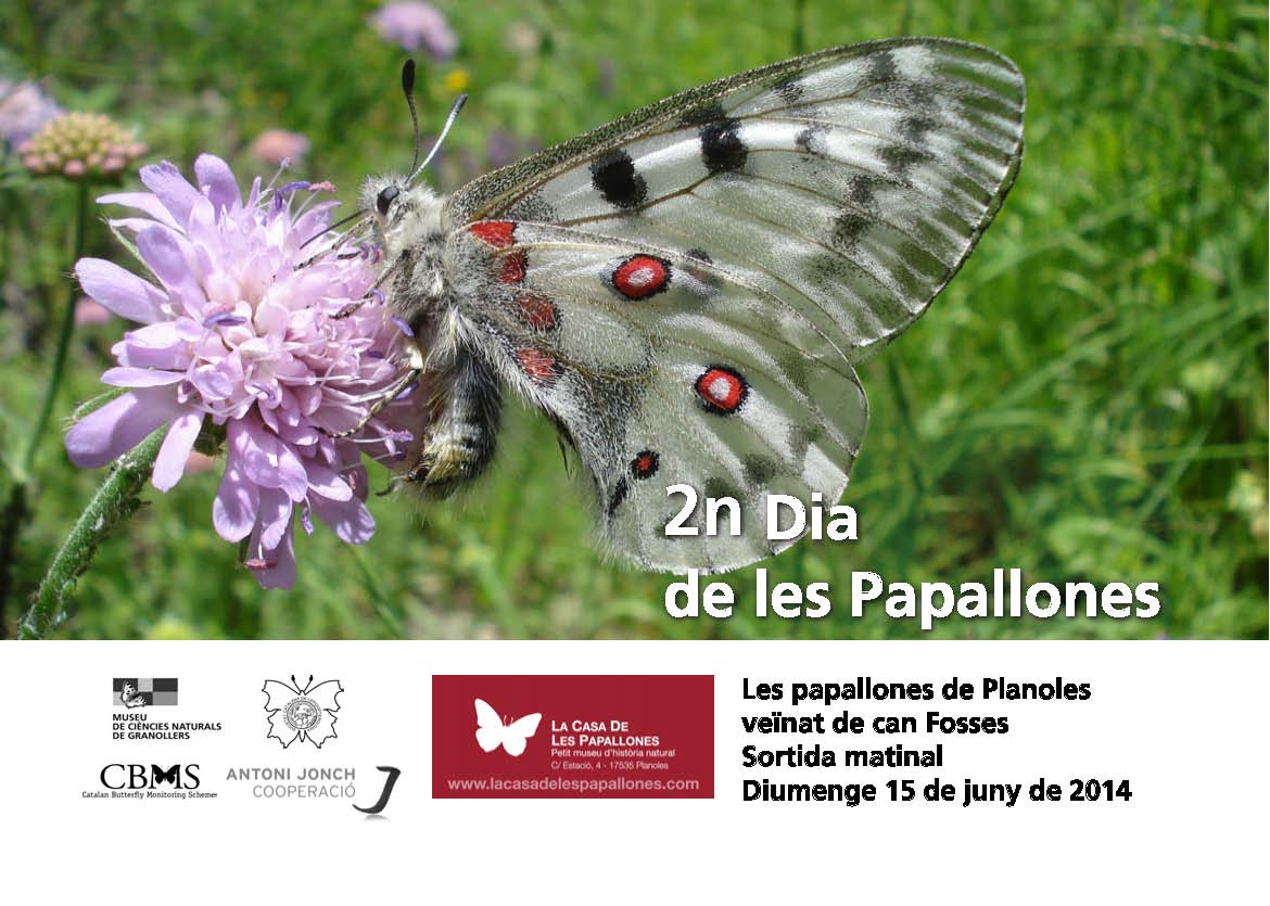 Second Butterfly Day in Planoles